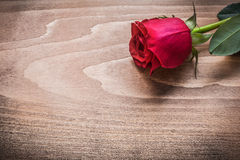 Red rosebud on wooden board holiday concept Royalty Free Stock Image