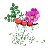Red rosehip berry flat icon. With inscription colorful vector illustration of eco food isolated on white Royalty Free Stock Photos