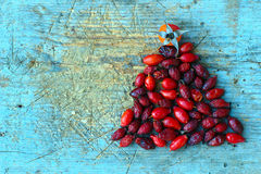 Red Rosehips On Blue Wooden Background Royalty Free Stock Images