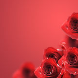 Red Roses. Beautiful Red Roses Border.With copy-cpace royalty free stock photography