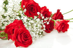 Red roses Royalty Free Stock Photography