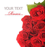 Red Roses. Beautiful red Roses border.isolated on a white background Stock Photo