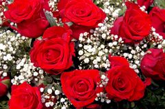 Red roses. A bouquet of red roses royalty free stock photos