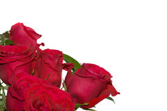 Red roses. A horizontal picture of six bright red roses on the bottom left corner of a white background with room for text Royalty Free Stock Images