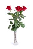 Red roses. Isolated on a white background Stock Photo