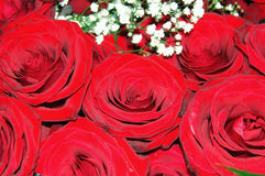 Red Roses. Beautifull red rosesready to be offered Stock Images