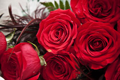 Red roses. And peacock feather bouquet close-up Royalty Free Stock Image