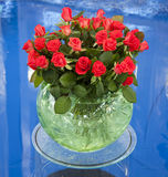 Red roses. A bunch of red roses arranged in a round glass vase on a blued background Stock Photos