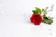 Red roses. On the white scene Royalty Free Stock Photography