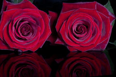 Free Red Roses Stock Image - 17545691