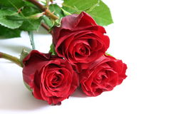 Red roses. Bunch of red roses on white background Royalty Free Stock Photos