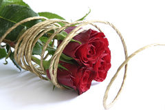 Red roses. Bunch of red roses with golden rope Stock Photography
