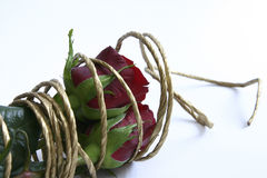 Red roses. Bunch of red roses with golden rope Royalty Free Stock Image