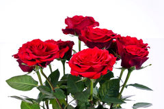 Red roses. A bouquet of red roses Royalty Free Stock Photo