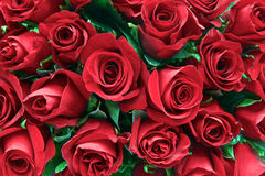 Red roses. Red  roses as a background Stock Photos