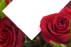 Red roses 2. A bouquet of red roses with a blank gift card Royalty Free Stock Photo