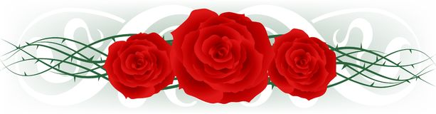 Red Roses. Three red roses arranged over thorny vines with a calligraphic background Royalty Free Stock Photo