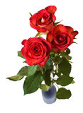 Red roses. Three red roses in vase. isolated over white Royalty Free Stock Photo