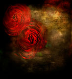 Red roses. On grunge dark background Stock Photography