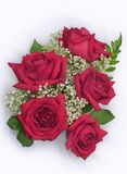 Red roses. On a white background Royalty Free Stock Photo
