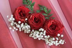Free Red Roses Royalty Free Stock Image - 28898116