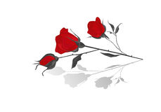 Red roses. Red and black roses with shadow Royalty Free Stock Images
