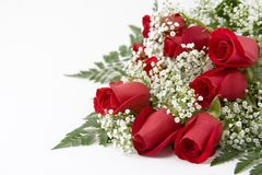 Red Roses. Picture of a dozen Red Roses on white background with space left for copy Stock Photo
