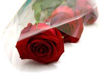 Red roses. With green leaves. Macro Royalty Free Stock Photo