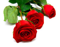 Red roses. With green leaves. Isolation on white background. Shallow DOF Royalty Free Stock Images