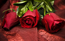 Red roses. Three beautiful red roses against a red background Stock Photography
