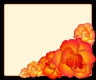 Red roses. Against a black-and-white framework Stock Illustration