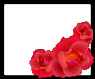 Red roses. Against a black-and-white framework Royalty Free Illustration