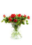 Red roses. Bouquet of red roses in vase, isolated on white background stock images