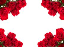 Red roses as frame on white background Stock Photo