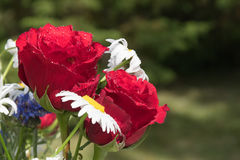 Red roses as a part of a summer flowers bouquet Royalty Free Stock Images