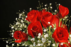 Red Roses and Babies Breath Royalty Free Stock Photography