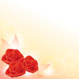 Red roses background Royalty Free Stock Photos