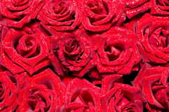 Red roses background Stock Photography