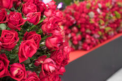Red roses. On the background Royalty Free Stock Photography