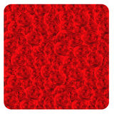 Red roses background. Stock Photos