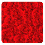 Red roses background. Stock Photography