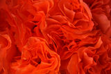Red roses background Royalty Free Stock Photography