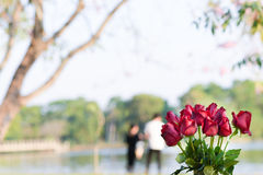 Red roses background with couples. Royalty Free Stock Photography