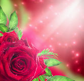 Red roses background with light and bokeh Stock Photos