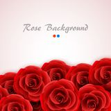 Red roses background. Rose cover for wedding invitation, postcard, greeting card or valentine day banner. Flower and Royalty Free Stock Images