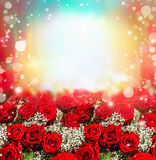 Red roses background with sun light and bokeh. Roses garden. Stock Photos