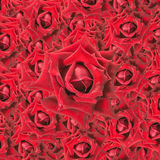 Red roses background. Valentine day Royalty Free Stock Photography