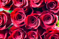 Red roses background. Background of red roses with water droplets royalty free stock photos