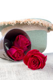 Red roses on a background weave hats. Stock Image