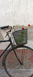 Red roses in basket of old rusty bicycle 3 Royalty Free Stock Photo
